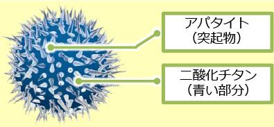 独自の技術「アパタイト被覆二酸化チタン」2つの成分が24時間ウィルスや菌を抑制し続けます!